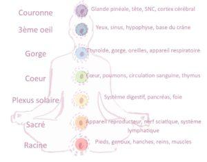 Les 7 chakras et les organes liés